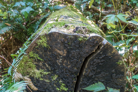 reclaiming: Nature is reclaiming a log as moss and lichen eat away at it.