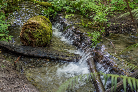 Water rushes over logs in a stream at Dash Point State Park in Washington State. Stock Photo