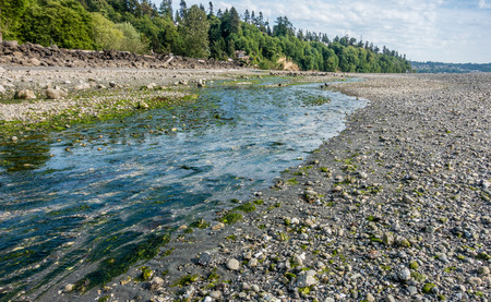 des: A view of the stream at Saltwater State Park in Des Moines, Washington. Stock Photo