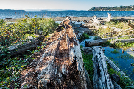 puget: Along rotting driftwood log points toward the Puget Sound at Seahurst Beach in Burien, Washington.