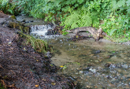 pacific northwest: Water flows in a small stream in the Pacific Northwest.