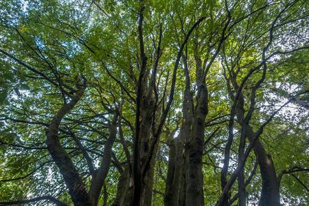 시애틀, 워싱턴에서 디스커버리 파크에서 나무 growning 나무의 추상 쐈 어.
