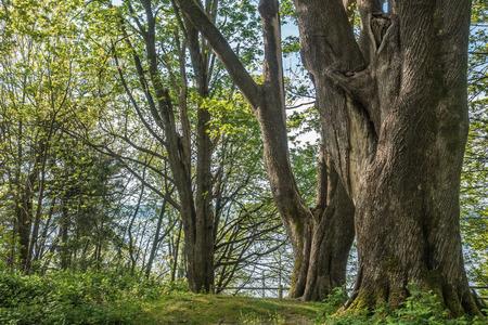 ワシントン州のダッシュ ポイント州立公園での木の様子