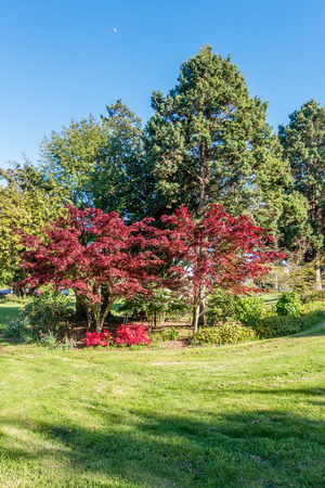 A veiw of trees and bushes at a West Seattle city park. Stock Photo
