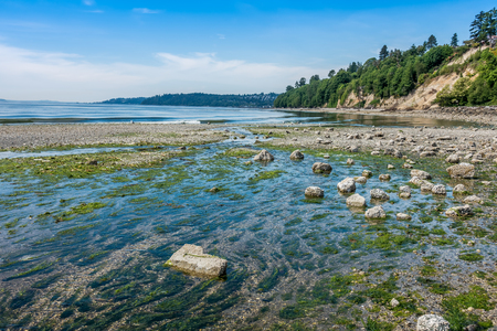 state of mood: A wide freshwater stream flows into the Puget Sound at Saltwater State Park in Washington State. The tide is low and a serene mood is set by calm waters. Stock Photo