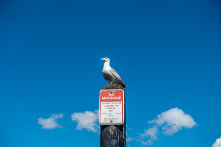A seagull sits on a post with a No Moorage sign beneath.
