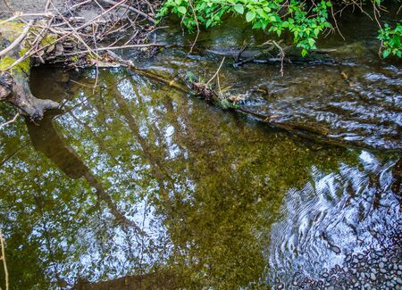 normandy: Trees are reflected in a stream in Normandy Park, Washington.