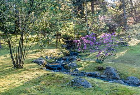flores fucsia: Una pequeña corriente fluye más allá de un arbusto con flores de color fucsia. Ubicación: Seattle, Washington.