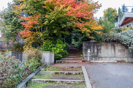 go up: Steps go up through Autumn trees in Burien, Washington.