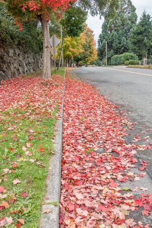 Fall colors brighten up this street in Burien, Washington. Stock Photo