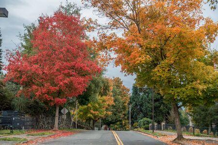 brighten: Fall colors brighten up this street in Burien, Washington. Stock Photo