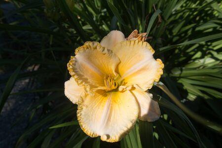 大きな黄色の花のクローズ アップ。 写真素材 - 67402086