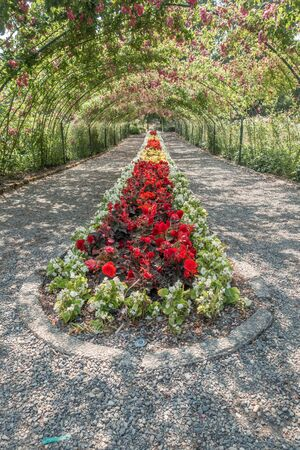 defiance: A arbor of Roses covers a center garden at Point Defiance Park in Tacoma, Washington.