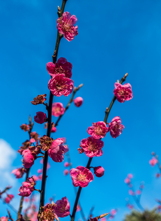graden: Closeup shot of red Spring flowers with dark blue sky behind.