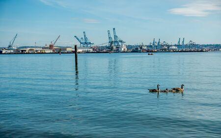 tacoma: A view of loading cranes at the Port of Tacoma.
