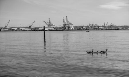 A view of loading cranes at the Port of Tacoma. Black and white image.
