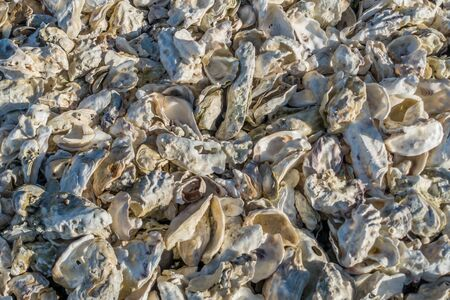 A pile of white oyster shells. Background or texture. Stok Fotoğraf