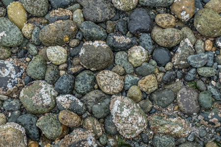 The tide is out in West Seattle, Washingon. Multi-colored seabed rocks are revealed as it begins to rain.