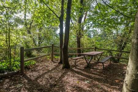 A picnic table in nestled between trees at Marine View Park in Normandy Park, Washington.