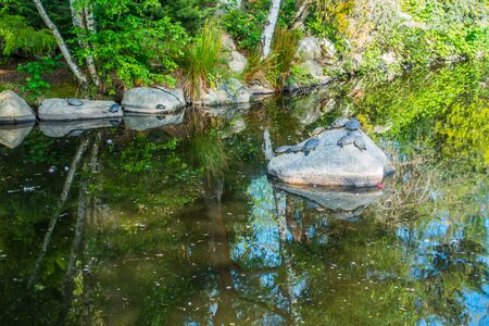 defiance: Trees are refleced in a pond at Point Defiance Park as turtles sit on a rock.