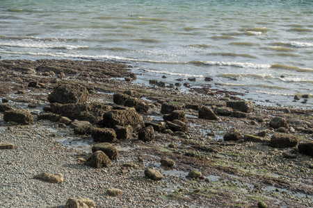 shorelines: With the tide out the seabed in uncovered on the West Seattle shoreline.