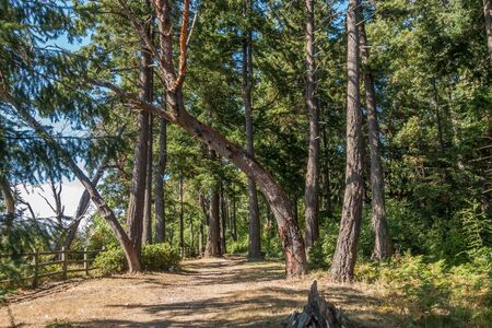 A view of a path next to a wooden fence at Dash Point State Park in Washington State.