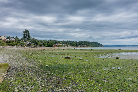 shorelines: The tide is low revealing the seabed in Normandy Park, Washington.