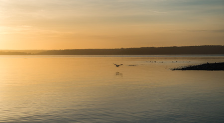 puget: Yellow luminous light envelops everything as the sun sets over the Puget Sound.