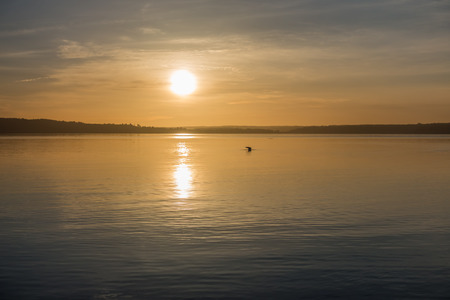 envelops: Yellow luminous light envelops everything as the sun sets over the Puget Sound.