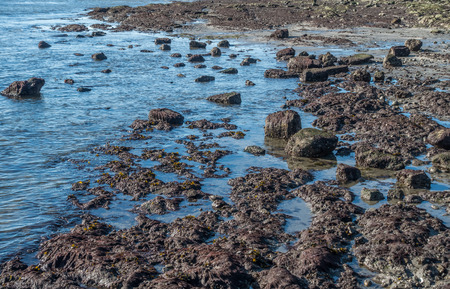 northwest: The tide is low revealing the seabed in West Seattle, Washington. Stock Photo