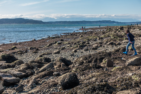 The tide is low revealing the seabed in West Seattle, Washington. Stock Photo