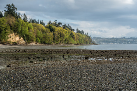 puget: A view of the shoreline at Saltwater State Park in Des Moines, Washington. It is Spring.