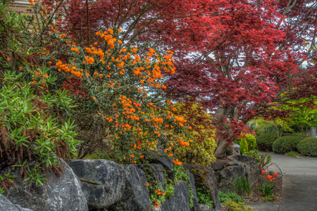 A view of Spring flowers in West Seattle, Washington. HDR image.