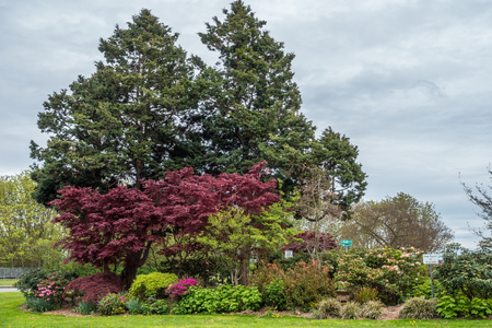 A view of trees and flowers at Hamilton Viewpoint Park in West Seattle, Washington.