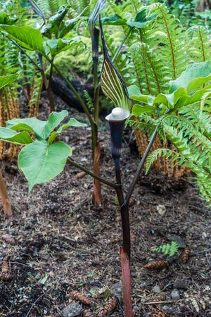 This plant in Tacoma, Washington looks like it is holding a ping pong ball.