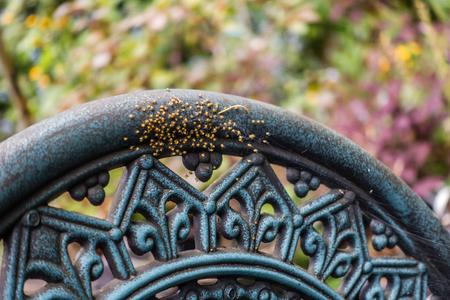 Closeup shot of newborn spiders on a chair. Banco de Imagens