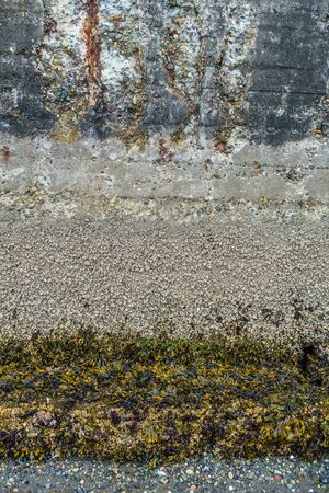 A macro shot of a sea wall. Texture or background. Stock Photo