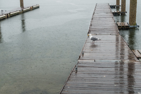A view of a dock in Redondo Beach, Washington. It is raining. Stock fotó - 80828829