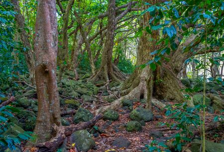 A view of trees in the Iao Valley in Maui, Hawaii.