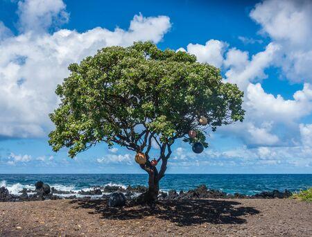 Boeien hangen aan een boom op Keanae Point op Maui, Hawaii. Stockfoto
