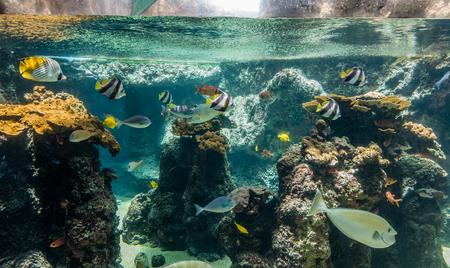 Fish swim in a tropical aquarium.