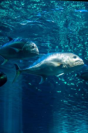 Fish swim beneath beams of light in and aquarium.