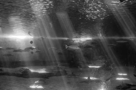 Fish swim beneath beams of light in an aquarium.