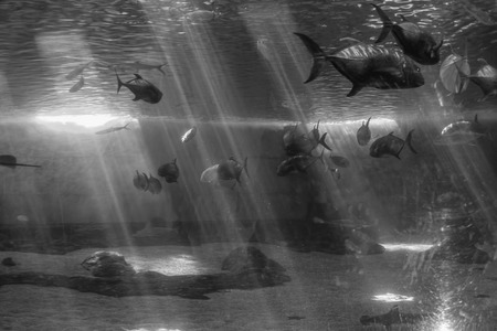 Fish swim beneath beams of light in an aquarium. Banco de Imagens - 84947002