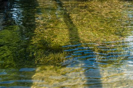Grss grow beneath the water at Gene Coulon Park in Renton, Washington.