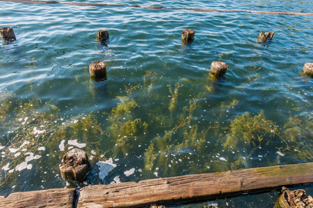 Plants grow up near old pilings at Gene Coulon Park in Renton, Washington.