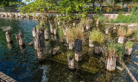 Plants grow out of old pilings at Gene Coulon Park in Renton, Washington.
