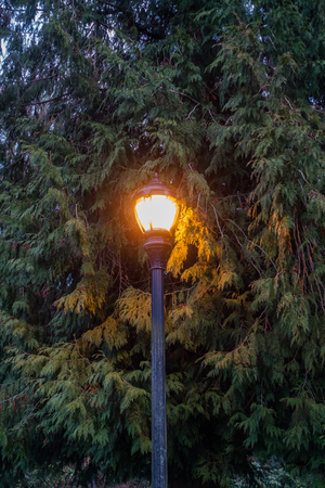 A street lamp shines brightly with evergreen trees behind.