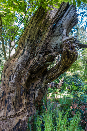 A veiw of a gnarly deadwood tree with lots of character.