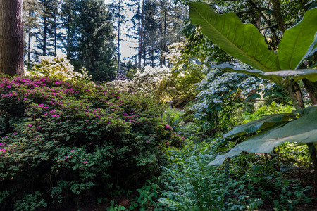 A view of a mixture of pland and flowers in Federal Way, Washington. Фото со стока